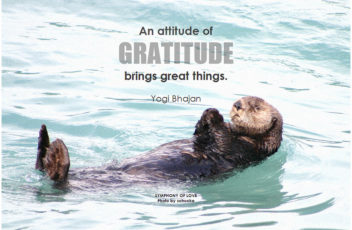 the-grateful-otter
